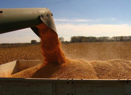 Ups and downs in the wheat market