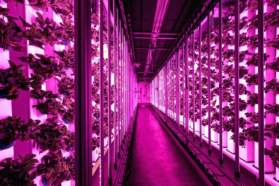 A 40ft Agricool reefer container uses a ton of LED lights to replace the sun