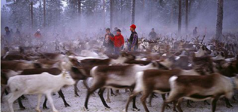 The railway would impact Sámi reindeer herders, the report said