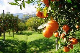 Port problems hit SA citrus exports