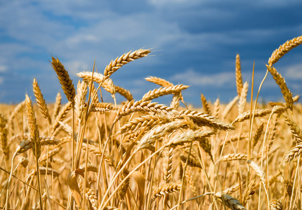 Grain carbon footprint scheme for ADM